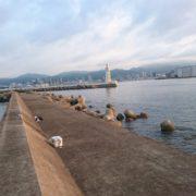 TV大阪『ガッ釣り関西』取材がありました